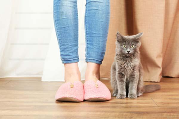 Fußboden Aus Geld ~ Welcher fußboden eignet sich für einen haushalt mit katzen